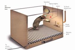 Picture of a rat in a skinner box